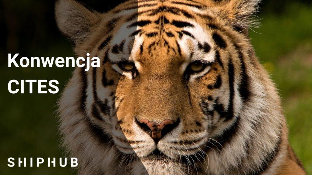 Konwencja CITES